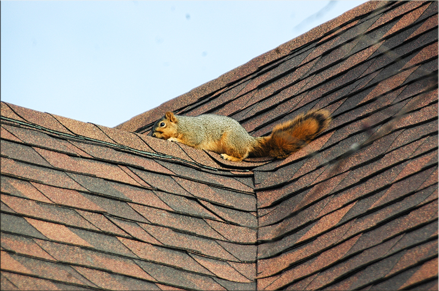 Proper Roof Conditions to avoid Pests